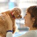 首輪 ASHUニューベビードットカラー SSサイズ 超小型犬 仔犬 子犬 チワワ ティーカッププードルペット用品 ペットグッズ 犬 用品 お散歩 迷子防止 トイプードル ダックス 犬の首輪 可愛い 犬のアクセサリー くびわ