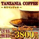 「キリマンジャロ 2000g」(約200杯分)特別価格3800円★送料無料500g×4袋で発送【コーヒー豆s】