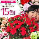 母の日 早割 カーネーション 赤 レッド ピンク さくらもなか オレンジ パープル イエロー など鉢植え 選べる15色 あす楽便対応 母の日 ギフト プレゼント 母 5号サイズ 送料無料 ボリューム満点 鉢花カーネーション ぬいぐるみ付き 花