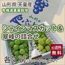 シャインマスカット 翠峰 すいほう 送料無料 ブドウ 葡萄 ぶどう 山形産