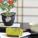 【盆栽】お花の盆栽とお菓子セット【ミニ盆栽 ミニ