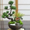 盆栽 モダン 松竹梅 5号 お正月 福 縁起物 植物 五葉松 梅 ぼんさい 正月飾り 寄植え