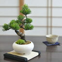 モダン盆栽とはじめて道具セット 普段の生活に取り入れやすいインテリアに合わせやすい緑の松盆栽