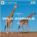 【訳あり】DAJ 070 WILD ANIMAL CD-ROM素材集 送料無料 あす楽 ロイヤリティ フリー cd-rom画像 cd-rom写真 写真 写真素材 素材