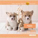 MIXAイメージライブラリーVol.294 かわいい子犬〈動物〉【メール便可】