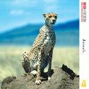 【あす楽】売切り写真館 JFI 048 動物たち CD-ROM素材集 送料無料 ロイヤリティ フリー cd-rom画像 cd-rom写真 写真 写真素材 素材