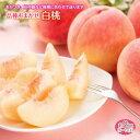 【ふるさと納税】白桃 約3kg 6~14玉 品種おまかせ F2Y-1345