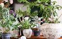 楽天山形県酒田市【ふるさと納税】≪年4回定期便≫植物と季節を感じる1年間「インドアグリーンスタイル」 観葉植物 お申込み日の翌月から3ヶ月ごと4回お届け