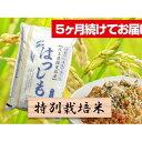 特別栽培米★5ヶ月★毎月白米5kg  お届け:2020年11月〜