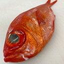 【ふるさと納税】a18-021 駿河湾 金目鯛一匹 約1kg 刺身用 煮つけ用 処理済み
