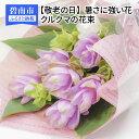 【ふるさと納税】【敬老の日】暑さに強い花 クルクマの花束 H...