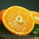 【ふるさと納税】セミノールオレンジ[約5kg]湯浅町田村産春...