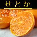 【ふるさと納税】■とろける食感!ジューシー柑橘 せとか 約2.5kg※2020年2月中旬〜3月上旬頃に順次発送予定