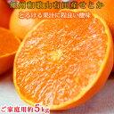 【ふるさと納税】とろける食感!ジューシー柑橘 せとか 約5kg(ご家庭用) ※傷あり