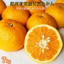 【ふるさと納税】湯浅産 初夏の柑橘 甘夏みかん 7kg ※2022年5月中旬頃〜5月下旬頃発送予定