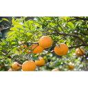 【ふるさと納税】上神農園の甘夏3種類詰め合わせ 10kg 【果物類・柑橘類・フルーツ・果物類・フルー...