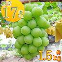 【ふるさと納税】 約1.5kg シャインマスカット 讃岐育ちのフルーツ ・ぶどう