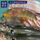 【ふるさと納税】福吉漁港直送!玄界灘の鮮魚セットB (5,6...