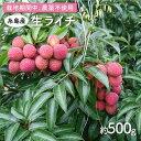 【ふるさと納税】糸島産 無農薬生ライチ(約500グラム) 吉永紫 AHC020
