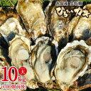 【ふるさと納税】【12月上旬着】ひろちゃんカキ大サイズ10Kg(100個前後) AJA006-2