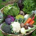 【ふるさと納税】【8品】あいちゃん農園の「よしのがり野菜」セット(ショート) [FAA001]