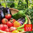 【ふるさと納税】【全12回定期便】栽培期間中農薬不使用!旬の...
