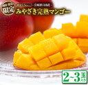 【ふるさと納税】≪期間・数量限定≫みやざき完熟マンゴー(2~3玉)フルーツ 果物