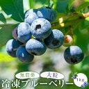【ふるさと納税】 近藤さんが厳選!特撰冷凍ブルーベリー 1kg(500g×2パック) ブルーベリー 冷凍ブルーベリー