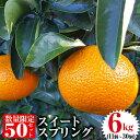 【ふるさと納税】《2020年1月中旬〜2020年2月末の間に発送予定》【数量限定】柑橘のスイートスプ...