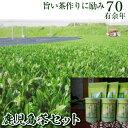 【ふるさと納税】鹿児島県産緑茶 香りの雫【新穂製茶】