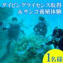 【ふるさと納税】ダイビングライセンス取得&サンゴ養殖(植え付け1株)1名様
