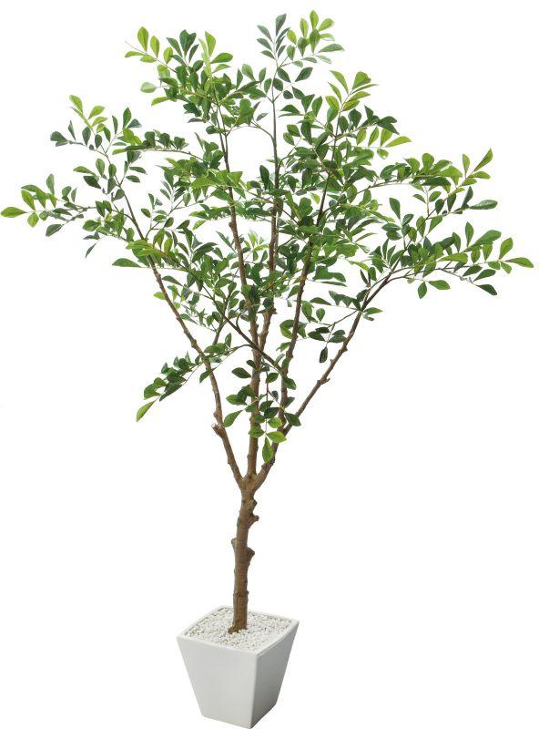 GLA-1311 トネリコツリーポット @11400×2個 《2016ydm》 花・ガーデン・DIY インテリアグリーン 観葉植物