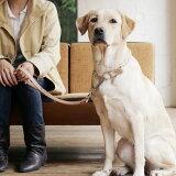 犬 リード 革 皮 犬用品大型犬 ヌメ ショート リード