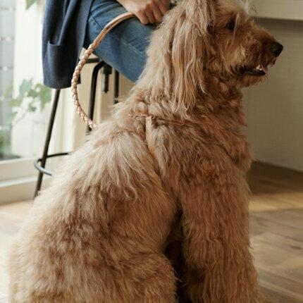 【かわいい】 appleapple 犬,犬 首輪 安い 国内出荷 大ヒット中