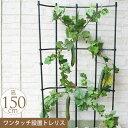 園芸 お花のアスレチック 巻き巻き トレリス 幅60cm×高さ150cm ガーデニング 家庭 菜園 庭 ベランダ 簡単 設置 組立