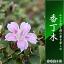 香丁木  コウチョウボク【香丁木 鉢植え】ピンク色の可愛い花 丈夫で育てく人気の盆栽【信楽焼き鉢入り】