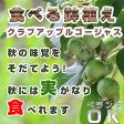【食べる鉢植え】クラブアップルゴージャスの鉢植え 見てよし食べてよし 楽しみ育てる鉢植え 果樹 果実
