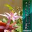 【盆栽】 ミニ盆栽  スイレン木盆栽お花の好きな方にお誕生日プレゼント