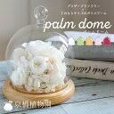 ★プリザーブドフワラーをガラスドームで包みました!★Palm dome(パームドーム)【ガラスドーム