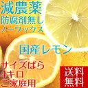 【愛媛県大三島産】冷蔵・送料無料 国産レモン【サイズばら4キ...