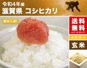 活アワビ 500gサイズ(オーストラリア産) 冷蔵便 [ 貝 あわび 鮑 ]