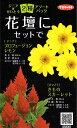 RoomClip商品情報 - 【種子】ジニア×けいとう 2種アソートパックサカタのタネ