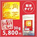 鹿角霊芝 100%粉末 30g(ろっかくれいし)【送料無料】