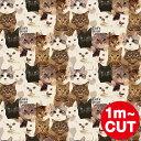 【1m単位切り売り】Cat's ISSUE キャットイシュー THE WALLPAPER TOKYO