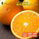 ショッピングORANGE 観音山清見オレンジ おてんば娘 B級品 1kg 和歌山 観音山フルーツガーデン 予約商品