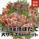 青森県むつ湾産活ほたて 大サイズ 4kg (16枚~20枚)