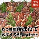 青森県むつ湾産活ほたて 大サイズ 8.5kg (34枚~42枚)