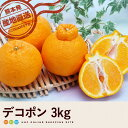 【送料無料】デコポン3kg(10〜12玉)【熊本県産】