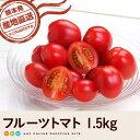 【送料無料】フルーツトマト1.5kg【熊本県産】