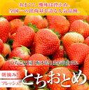 【送料無料】【楽天ランキング1位】栃木県日光産!本場の苺「とちおとめ」300g×2パック[イチゴ い